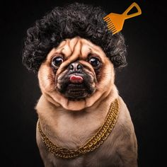 The_Pug_Life_Adorable_Portraits_Of_Lovable_Pugs_Dressed_As_Hip_Hop_Artists_2015_13