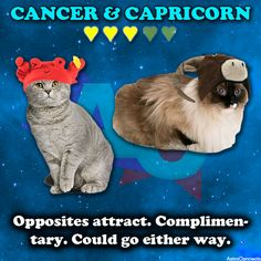 Cheryln & Joe - Cancer & Capricorn Compatibility: Opposites attract. Complimentary. Could go ether way.