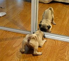 This puppy who's still not sure what the heck just happened. | 37 Animals Who Failed So Spectacularly They Almost Won