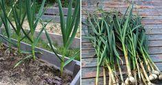 Ideas que mejoran tu vida Diy Planters, Planter Pots, Permaculture, Vegetable Garden, Vegetables, Green, Plants, Gardens, Vegetable Gardening