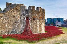 À Londres, 888 246 coquelicots exposés en l'honneur des 888 246 morts britanniques de la Grande Guerre...