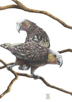 Kaka birds Beautiful Artwork, Beautiful Gif, Fox Home, Wild Honey, Grey Fox, Bird Feathers, Parrots, My Arts, Kawaii