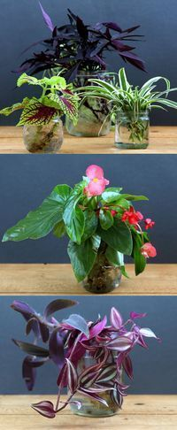 The easiest and most foolproof way to grow indoor plants in glass bottles and water. 10 beautiful plants for an easy-care indoor garden and clean air! - A Piece Of Rainbow #waterplantsglass