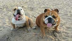 Beach boy cuties.