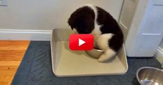 One commenter said this behavior can be indicative of diabetes. This Little Pup Got A New Water Bowl And Now He's A Little Confused. His Reaction Is Almost Too Cute For Words! Fluffy Puppies, Puppies And Kitties, Cute Puppies, Pet Dogs, Doggies, Animal Rescue Site, Animal Rescue Shelters, Funny Animals, Cute Animals