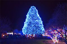 Toledo Zoo, Lights before Christmas