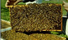 honey is good Busy Bee, Bee Happy, Bee Keeping, Little Gifts, Cool Pictures, Cancer, Wood, Health, Mai