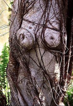 arbre bizarre