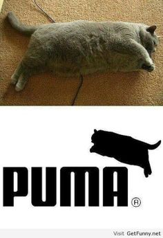 Diet quotes funny hilarious fat cats ideas for 2019 Funny Animal Jokes, Really Funny Memes, Cute Funny Animals, Stupid Memes, Stupid Funny Memes, Funny Animal Pictures, Funny Relatable Memes, Animal Memes, Haha Funny