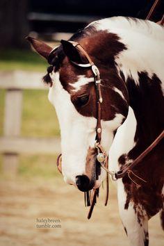 Horse / Ride It Like You Stole It