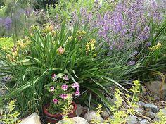 Virtual Garden Tour: June 2013