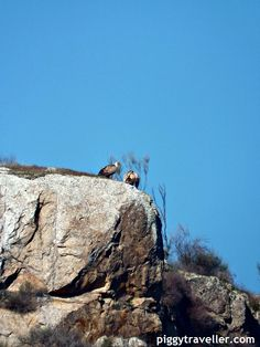 Egyptian vultures in Alcántara quarry, Extremadura (Spain). http://www.piggytraveller.com/swimming-in-a-quarry-alcantara/