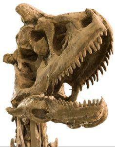 Twitter / ferwen: #FossilFriday Carnotaurus sastrei ...