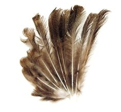 Real natural feather  set of 12 by seragun on Etsy, $12.00