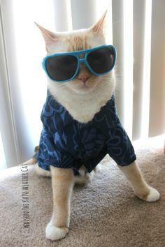 Watson The Cat Favorite Things :)