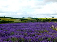 Recent Favourite Pictures of England. The Beautiful Country, Beautiful World, Beautiful Places, Pictures Of England, Buy Images, British Country, Exposure Time, Lavender Fields, English Countryside
