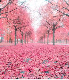 Find images and videos about pink, nature and photo on We Heart It - the app to get lost in what you love. Pink Trees, Colorful Trees, Pink Leaves, Blossom Trees, Nature Wallpaper, Rainbow Wallpaper, Trendy Wallpaper, Black Wallpaper, Pink Aesthetic