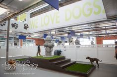 You are in the right place about luxury dog kennel designs Here we offer you the most beautiful pict Dog Kennel Designs, Kennel Ideas, Indoor Dog Park, Luxury Dog Kennels, Pet Sitting Business, Dog Playground, Dog Kennel Cover, Pet Hotel, Pet Boarding