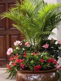 Palm Trees Garden, Small Palm Trees, Tropical Garden, Summer Garden, Container Flowers, Container Plants, Succulent Containers, Outdoor Pots, Outdoor Gardens
