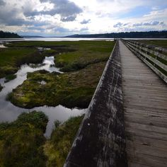 Theler Wetlands, Belfair, Washington — by Jeremy Stitt. A great place to take a nice stroll in Belfair, WA is the Theler Wetlands