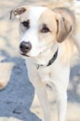 Arlo is an adoptable Collie Dog in Indianapolis, IN. I'm looking for a very special owner. My previous owner said I did not like to be in my crate and they did not want to work with me on this. So, no...
