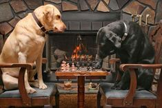NOTHING LIKE A FIRESIDE CHESS GAME ON A COLD WINTER EVENING.  SH