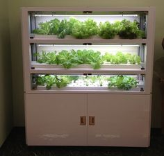 IKEDA Mini Vege, a vegetable cultivation machine