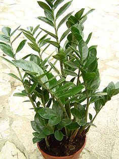 Bizonyára nem sejted, hogy az általad gondozott, szépségével elkápráztató növények mérgezők is lehetnek, akár gyilkos mérget is rejthetnek magukban.  A...