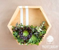 Vertical succulent gardens are so popular right now, from home decor to wedding decorations, and Walnut Hollow has some beautiful wood pieces that are perfect for creating a modern-looking vertical…