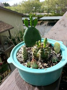 Cactus garden in antique cookware