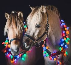 Majestic 25 Best Christmas Horse https://meowlogy.com/2017/11/14/25-best-christmas-horse/ When it regards the solar Christmas lights there are a lot of choices that will make your home seem great.
