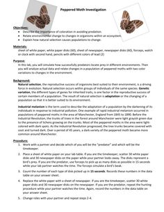 Peppered Moth Lab in addition Images of Peppered Moths Activity    rock cafe moreover  besides Modeling Peppered Moths and Industrial Melanism by Canary Science likewise Answers   Lab  Peppered Moth Survey   YouTube furthermore Peppered Moth Simulation Worksheet Answers further Peppered Moth Simulation Worksheet Answers besides Peppered Moth Simulation also  moreover  likewise The peppered moth story is solid « Why Evolution Is True together with Peppered Moth additionally Darwins Natural Selection Worksheet Beautiful Peppered Moth moreover 12 Best Images of Darwin's Natural Selection Worksheet Key likewise worksheet  Peppered Moth Simulation Worksheet Answers  Carlos Lomas together with . on peppered moth simulation worksheet answers