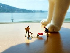 """500px / Photo """"Miniature cleaning cat litter"""" by Emily C"""