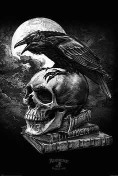 Alchemy Gothic - Fantasy Poster/Print (Edgar Allan Poe's Raven & Skull) (Size: 24 inches x 36 inches) Gothic Wallpaper, Skull Wallpaper, Crow Art, Raven Art, The Raven, Rabe Tattoo, Gothic Drawings, Dark Art Tattoo, Gothic Tattoo