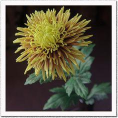 Купить Цветы из полимерной глины - Хризантема - полимерная глина, тайклей, керамическая флористика, Холодный фарфор