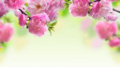 розовые, цветение, цветы, весна, Ветки