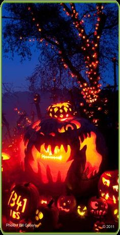 Things to Do in Providence, Rhode Island - Jack o Lantern Spectacular - http://www.infobarrel.com/Things_to_Do_in_Providence_Rhode_Island#