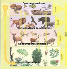 Ecosistemas                                                                                                                                                                                 Más Plant Science, Science And Nature, 2nd Grade Classroom, Science Activities, School Projects, Teaching Resources, Education, Comics, Poster