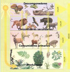 Ecosistemas                                                                                                                                                                                 Más