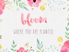 bloom-where-you-are-planted-ipad.jpg 2,560×1,920 pixels