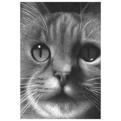 A #portrait of a beautiful #cat, Ella :: by Alice Stearns | hand drawn with #graphite #pencils