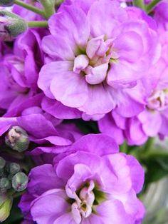 Stock flowers.