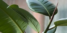 Wist je dat er veel planten bestaan met luchtzuiverende eigenschappen? Ruimteorganisatie NASA deed er onderzoek naar en stelde een top 15 op met de 'beste' zuiverende planten. Uit het onderzoek komt naar voren dat onderstaande planten maar liefst 70 tot 80% van de schadelijke chemicaliën uit de lucht kunnen halen. Onder die chemicaliën wordenbenzeen, tricholoorethyleen…