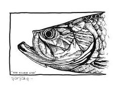 Image result for fish artists