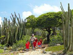 Reasons to visit the Caribbean Island of Aruba