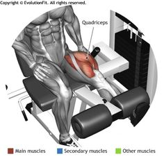 QUADRICEPS -  LEG EXTENSION MONO