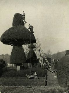 topiary building