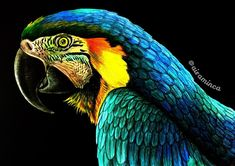 Macaw by Maria Helm