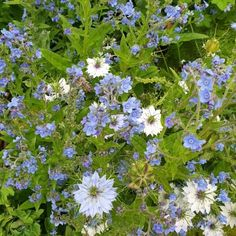 Nz Art, Blue Garden, Shade Plants, Art Portfolio, Colour Schemes, Flower Beds, Bold Colors, New Zealand, Beautiful Flowers