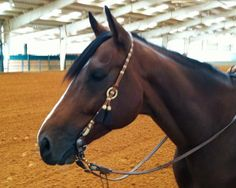 bridles on horses - Google Search